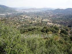 42.000 M² LAND WİTH SEA AND NATURE VİEW İN ORTAKENT - YAKA FOR SALE
