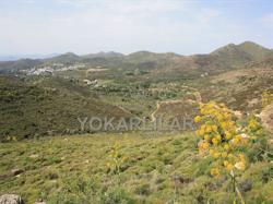 BARGAIN FARMLAND FOR SALE IN BODRUM, DEREKOY