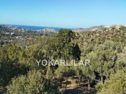 OLIVE GROVE IN YALIKAVAK FOR SALE