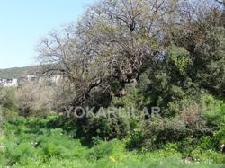 LAND IN THE CENTER OF YALIKAVAK FOR 16 VILLAS CONSTRACTION
