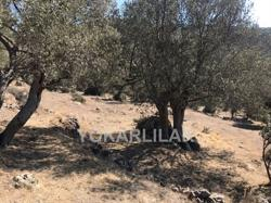 INVESTMENT LAND IN YALIKAVAK FOR SALE