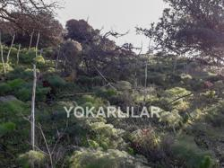 LAND FOR TWO MANSIONS CONSTRACTION IN YALIKAVAK FOR SALE